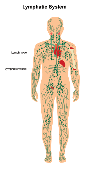 Illustration of lymphatic system