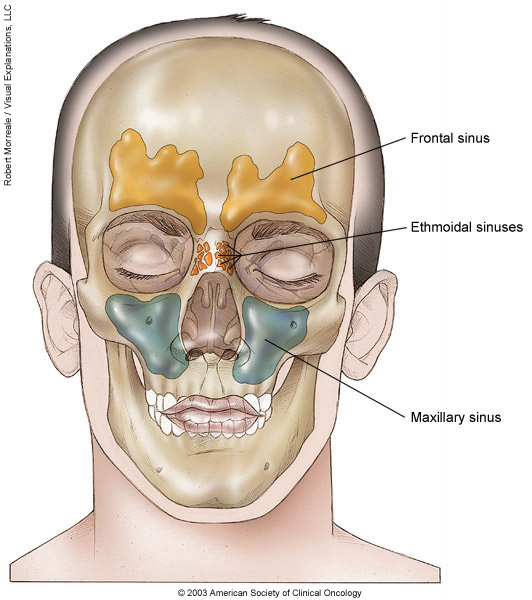 Nasal Cavity And Paranasal Sinus Cancer Medical Illustrations