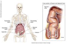 Colon Anatomy