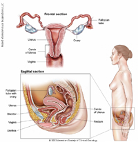 Women's Cancers Anatomy