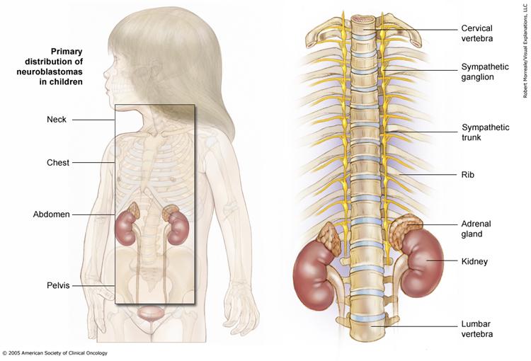 Медицинские иллюстрации