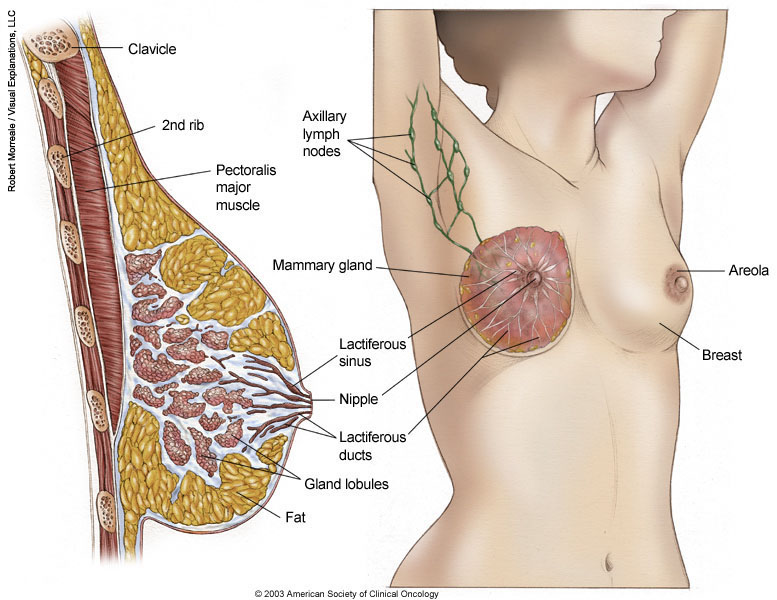 Breast Cancer Topic: Lump on outer breast edge
